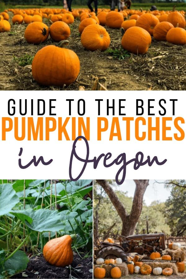 best pumpkin patches in oregon